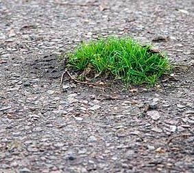 Pavement Grass
